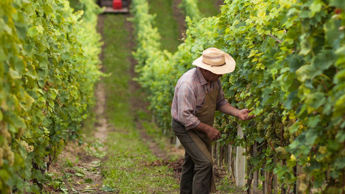 Northern Italy Food & Wine Tour 2019/2020   Newmarket Holidays